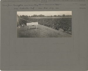 Thumbnail for the first (or only) page of View from Eucalyptus tree near Row 1, Block 1.