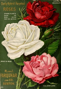Thumbnail for the first (or only) page of Farquar's Garden Annual, 1905, Back Cover.