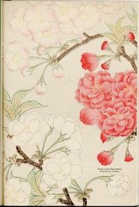 Thumbnail for the first (or only) page of The Yokohama Nursery Co., 1905, Page 37.