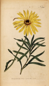 Thumbnail for the first (or only) page of Calendula tragus (Bending-Stalked Marigold) - Plate 408.