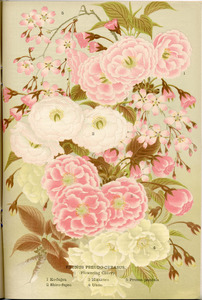Thumbnail for the first (or only) page of The Yokohama Nursery Co., 1910, Page 39.