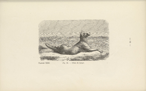 Thumbnail for the first (or only) page of Chien de berger. Figure 36. La Connaissance Generale Du Mouton by Louis Moll and Eugene Gayot. 1867..