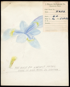 Thumbnail for the first (or only) page of <em>Iridaceae</em> (Iris).