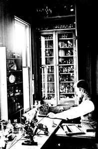 Thumbnail for the first (or only) page of H.J. Webber in the Sub-Tropical Laboratory at Eustis, Fla., at work with microtome. June, 1895..