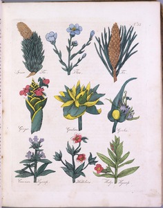 Thumbnail for the first (or only) page of Spruce Fir, Flax, Fir, Ginger, Gentian, Garlic, Common Hyssop, Hellebore, Hedge Hyssop - Plate 23.