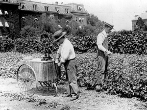 Thumbnail for the first (or only) page of Dorsett spraying grape vines on the grounds of the Department of Agriculture for powdery mildew. A little east of the present West Wing. Pat at the pump; Dorsett at the nozzle..
