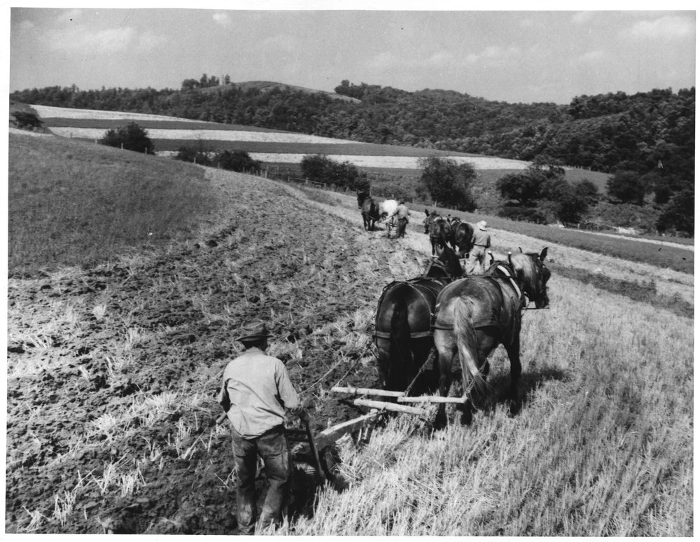 Three farmers, each with a plow and two horses plow a field of unidentified grain by the shape of the land. Defined contoured fields and trees are in the background.