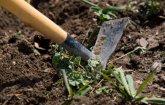 Weeding hoe in garden soil. (Copyright IStock)