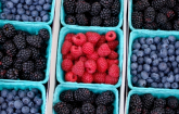 Blackberries, blueberries and raspberries. (Copyright IStock.)