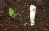 A seedling near a one-hundred dollar bill sprouting from the soil. (Copyright IStock)