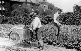 Two workers spraying grape vines on the grounds of the USDA