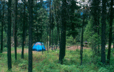 Campground on the Cascade Ranger District of the Boise National Forest, Idaho