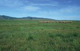 Selected Pasture, Forage and Rangeland Publications (Gary Kramer,USDA/NRCS)