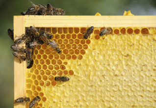 Beekeeping | Alternative Farming Systems Information Center