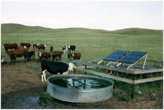 Cows and solar livestock watering system (Photo Credit NRCS)