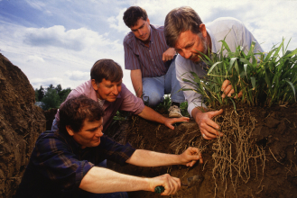 Four students examining plant roots below the soil. (Copyright ARS)