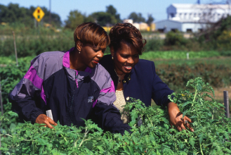 Two African American women examining crops in the field.