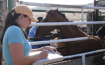 APHIS Veterinarian at the Warm Springs facility