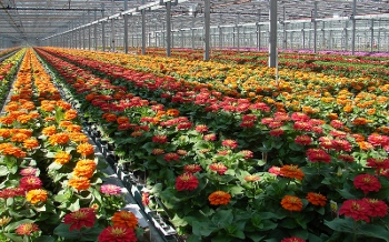 Flowering plants at Metrolina Greenhouses in Huntersville, North Carolina