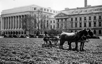 A U.S. Department of Agriculture employee plants a new lawn using a mule drawn tiller in June 1931