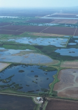 Ariel of wetlands and fields.