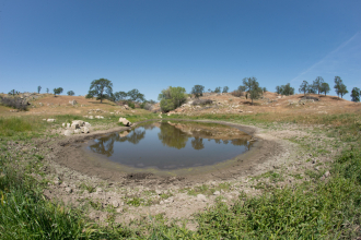Water hole evaporating due to drought.