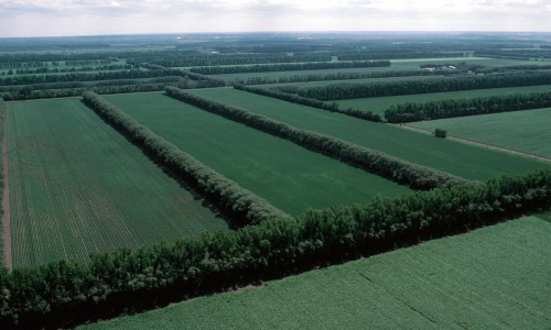 Field windbreaks in North Dakota protect the soil against wind erosion