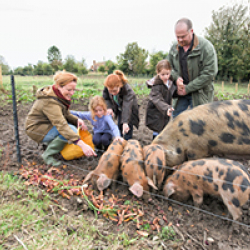 A family is feeding pigs in a field.