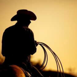 Cowboy with rope on a horse: Copyright iStock Photos