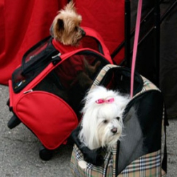Two dogs in carriers